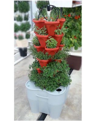 Growing herbs from hydroponic vertical gardens