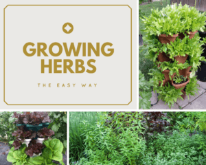 growing herbs the easy way