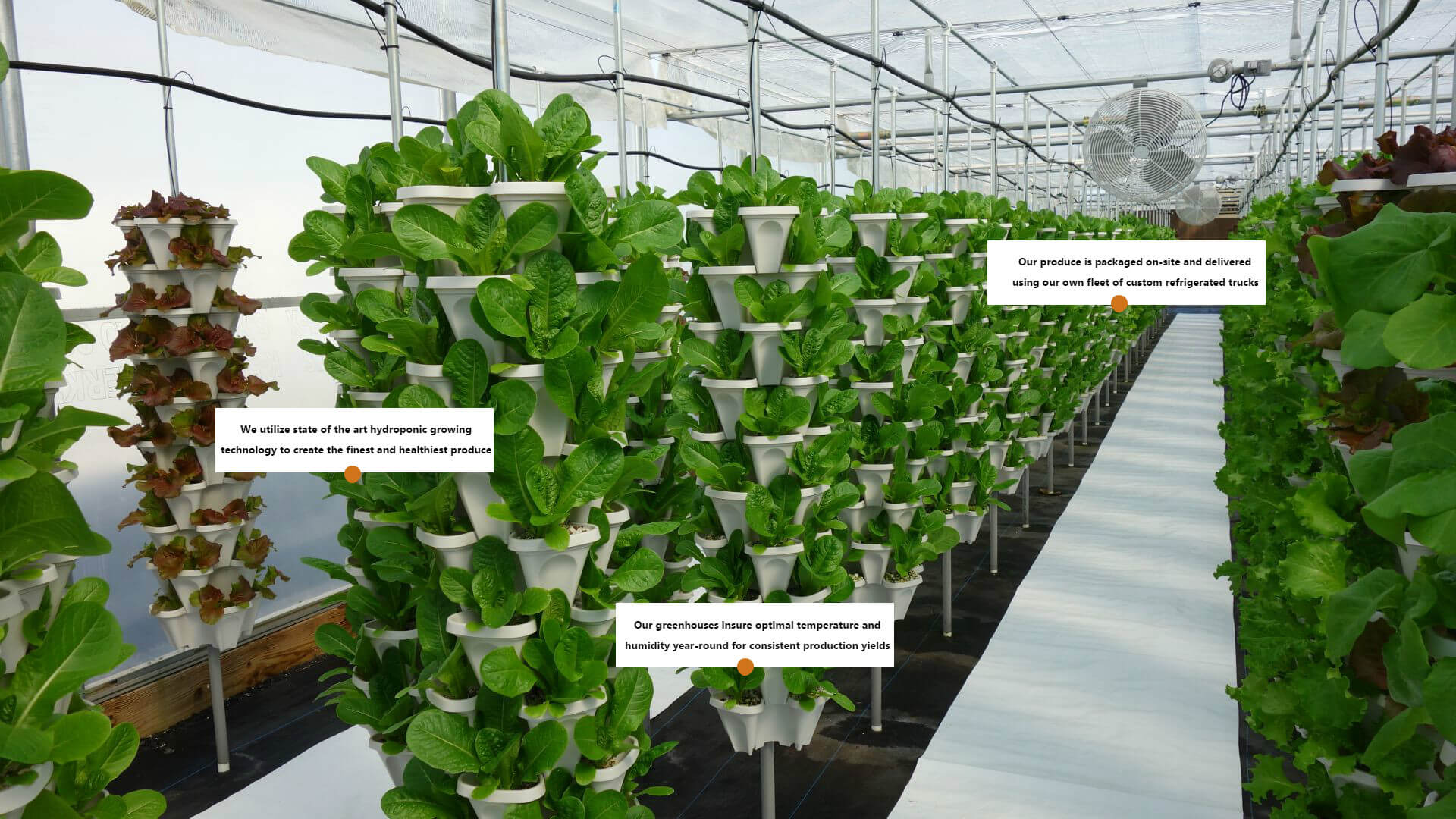Hydroponic growing system mr stacky vertical gardening farms for Vertical planting system