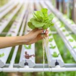 Hydroponics for Beginners: 3 Things You Need to Know