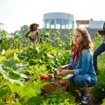 What is Urban Farming?