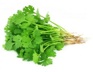 Coriander picture with white background