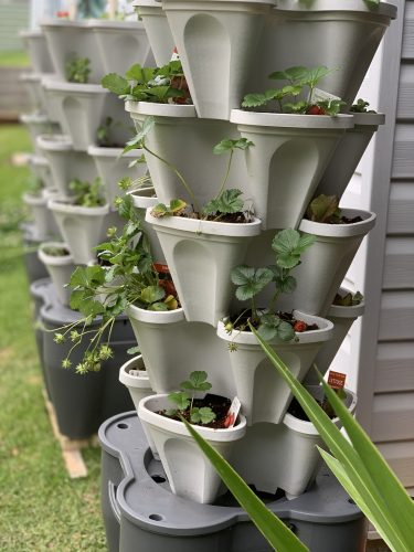 Smart Farm 3 Tower Hydroponic Garden photo review