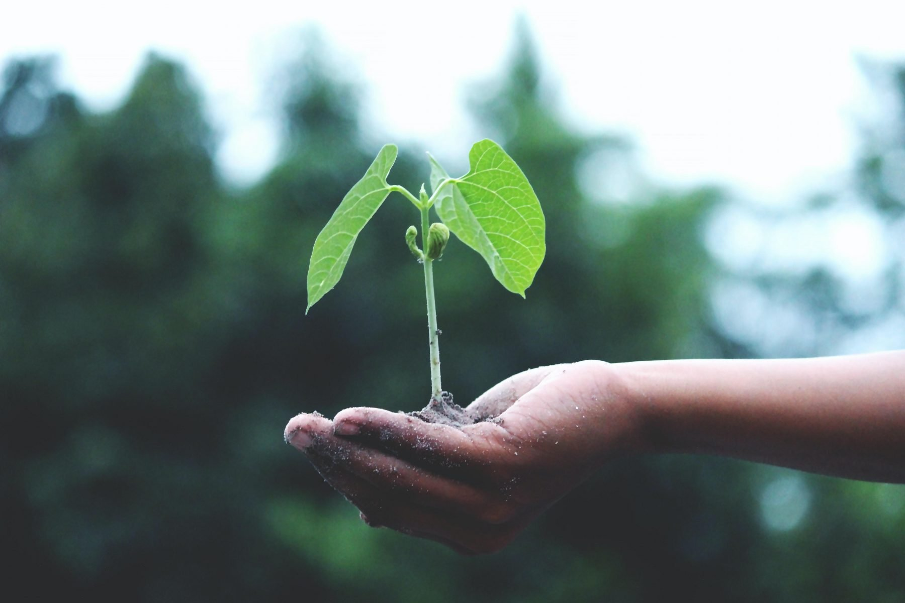 hand holding small seedling