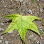 Nutrient Deficiency in Plants: Causes and Solutions