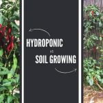 How to Grow Plants Faster and Increase Yield with Hydroponics