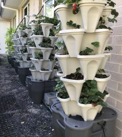 5 tower smart farm set-up with strawbs