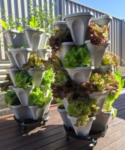 double stacky large stone growing lettuce with wheels