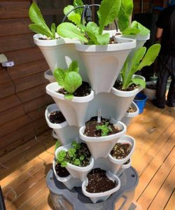 smart farm on the deck growing lettuce and herbs